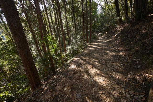 木漏れ日が美しい登山路。