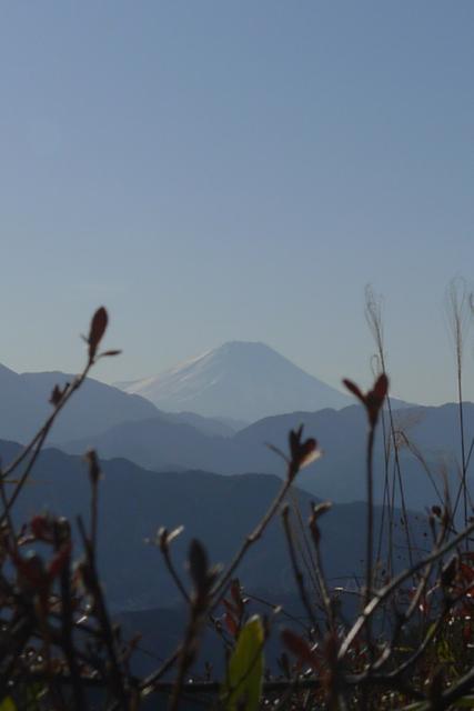高尾山のもみじ台から臨む富士山