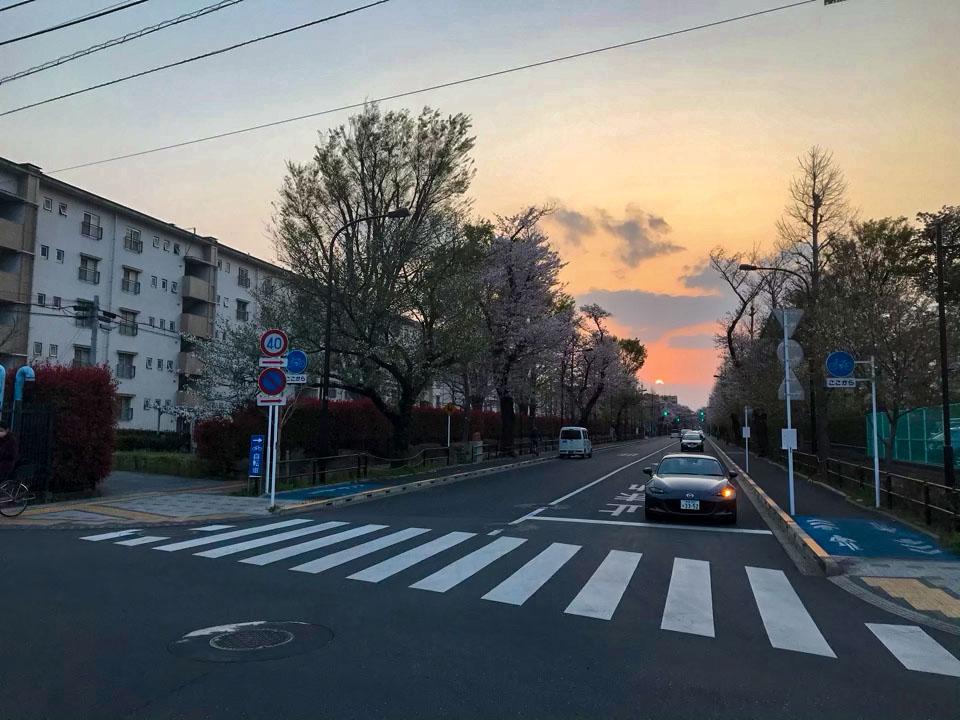国立の桜並木と夕日