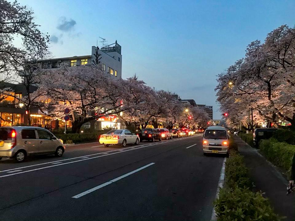 国立駅南口の桜並木