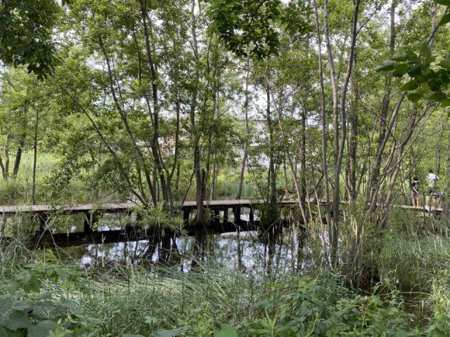 羽衣公園の湧水