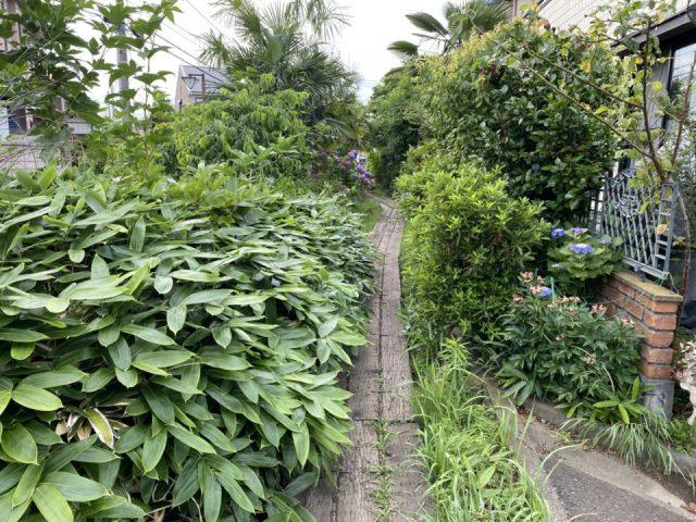 矢川の小道