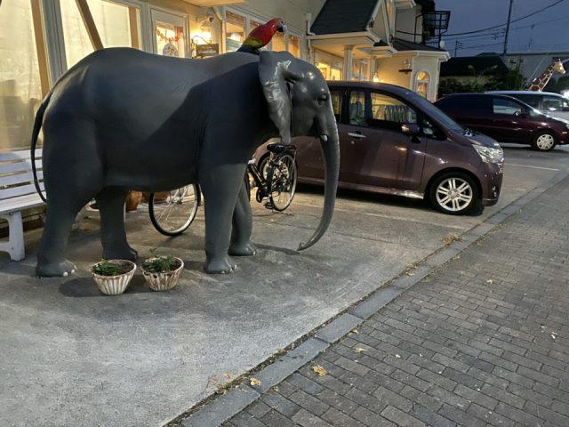 どうぶつの森総合病院の象