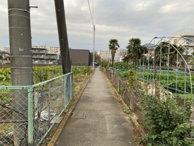 国立市矢川駅の農園
